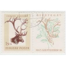 Охота. Благородный олень. 1963 г.