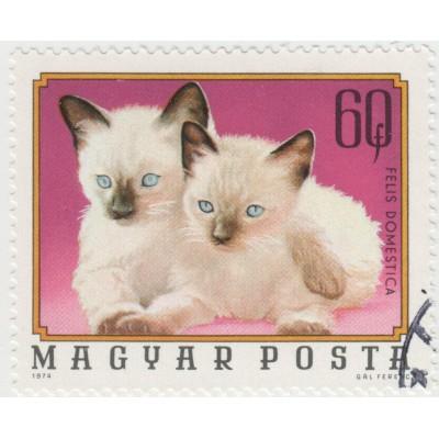 Кошки. 1974 г.