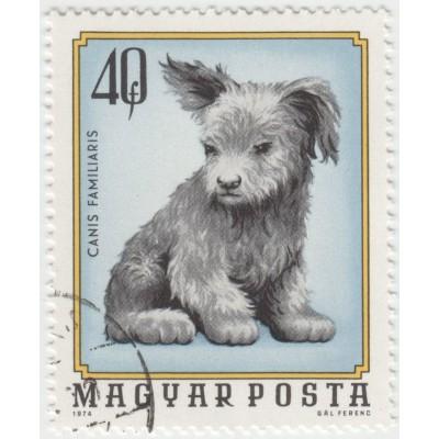 Собака. 1974 г.