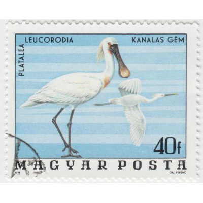 Обыкновенная колпица. 1976 г.