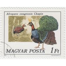 Конголезский павлин. 1977 г.