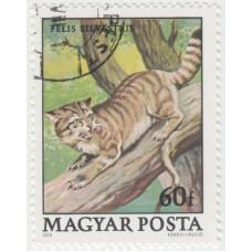 Лесной кот. 1979 г.