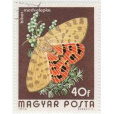 Бабочки. Медведица пурпурная. 1974 г.