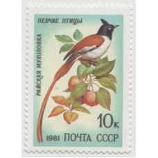Райская мухоловка 1981 г.