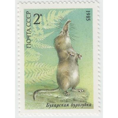 Бухарская бурозубка. 1985 г.