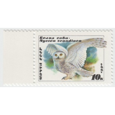 Белая сова. 1990 г.