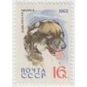 Кавказская овчарка. 1965 г.