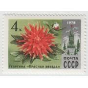 """Георгина """"Красная звезда"""" 1978 г."""