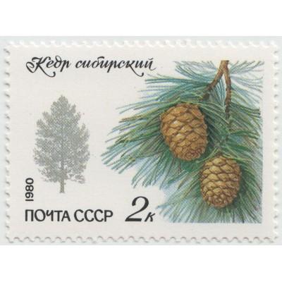 Кедр сибирский 1980 г.