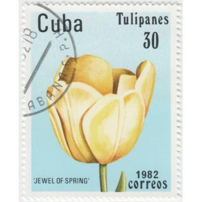 Тюльпаны. 1982 г.
