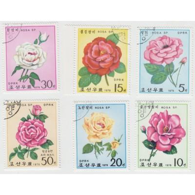Розы. 1979 г.