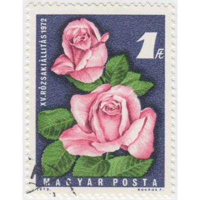 Цветы. Роза. 1972 г.