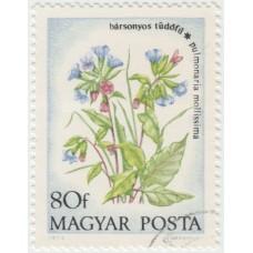 Цветы. Медуница мягкая. 1973 г.