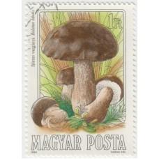 Белый гриб. 1984 г.
