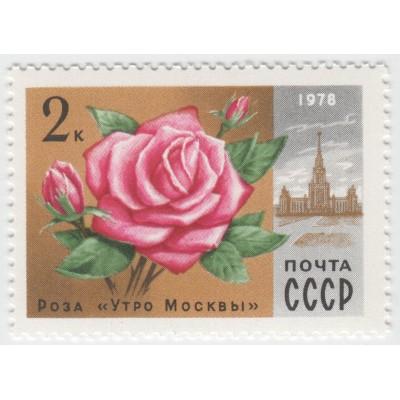 "Роза ""Утро Москвы"" 1978 г."