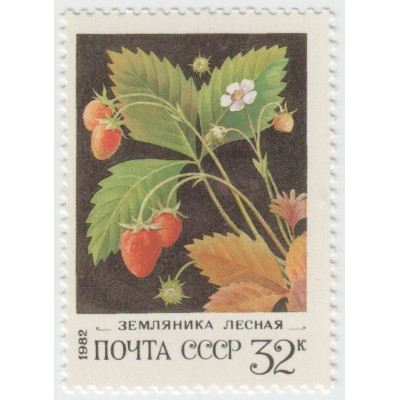 Земляника лесная 1982 г.