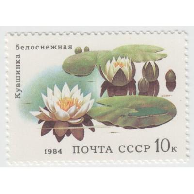 Кувшинка белоснежная. 1984 г.