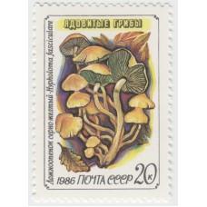 Ложноопенок серно-желтый. 1986 г.