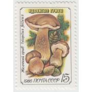 Желчный гриб. 1986 г.