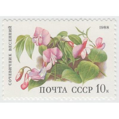 Сочевичник весенний. 1988 г
