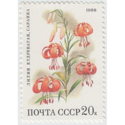 Лилия кудреватая. 1988 г